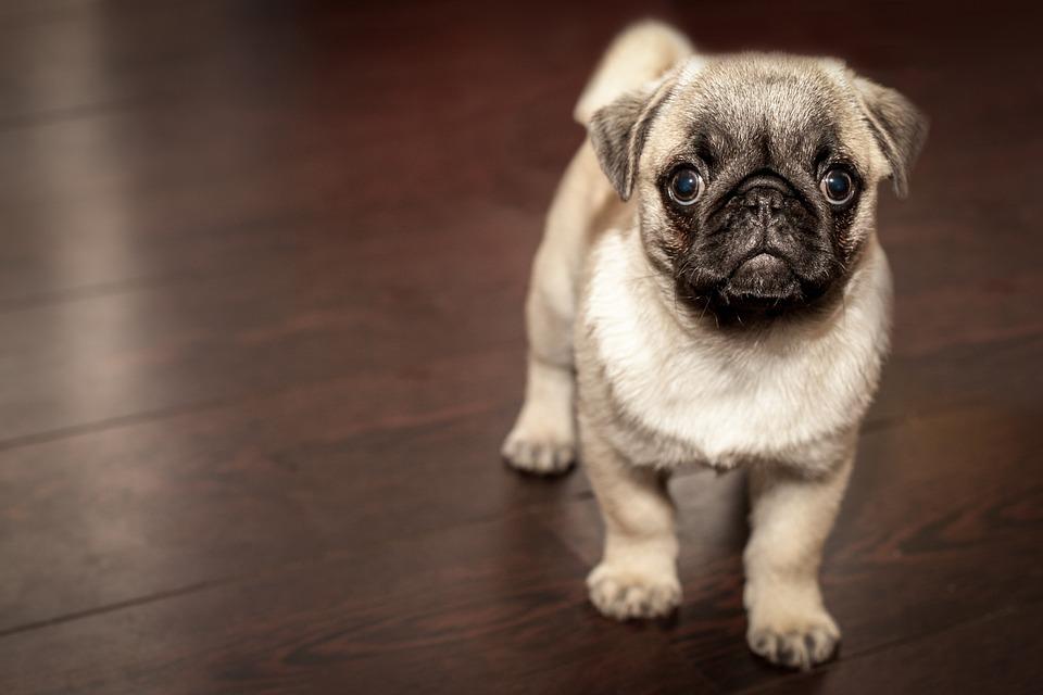 Colazione per i cani: il tuo bar quanto è dog-friendly?