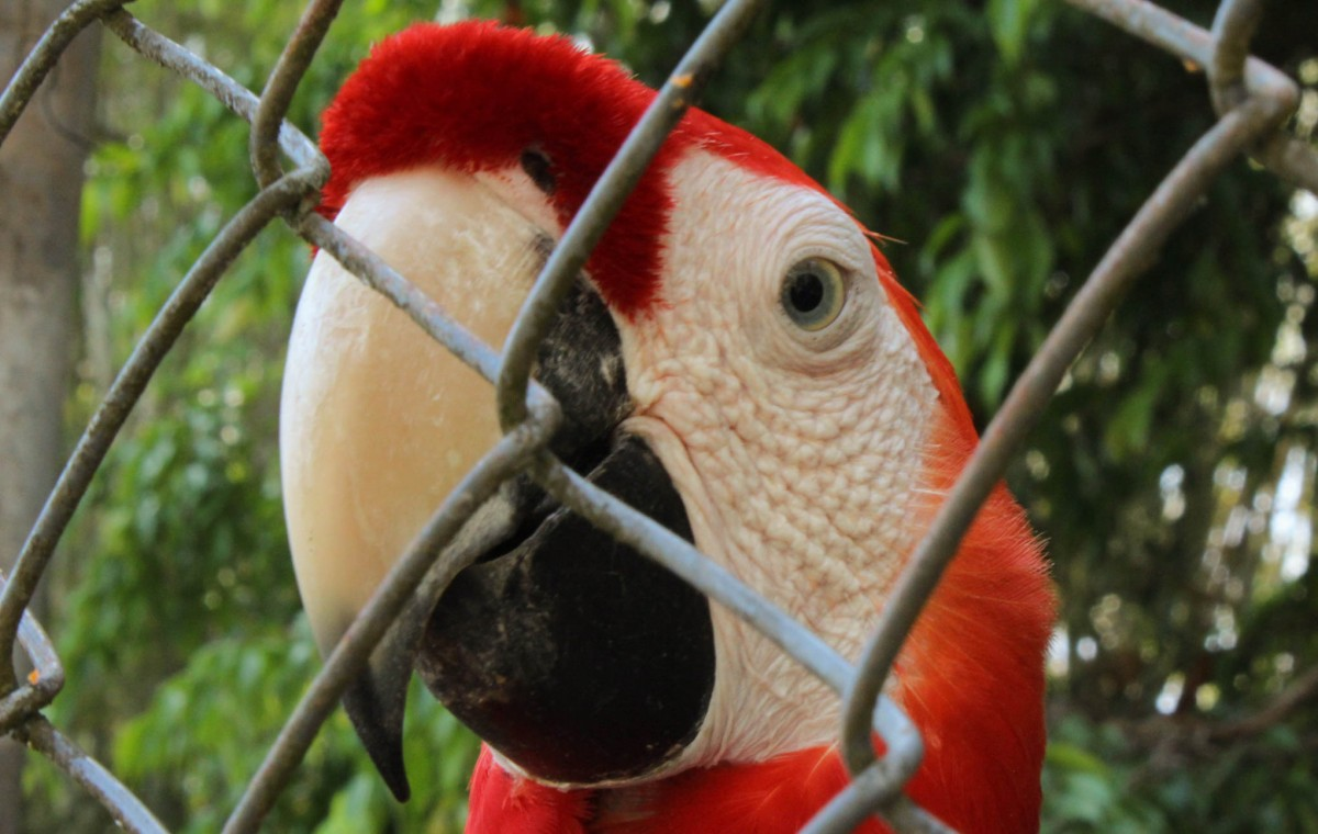 ANIMALI COME ATTRAZIONE NEL BAR?